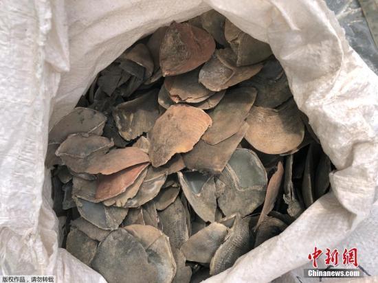 中国关押走私穿山甲秤的监狱17