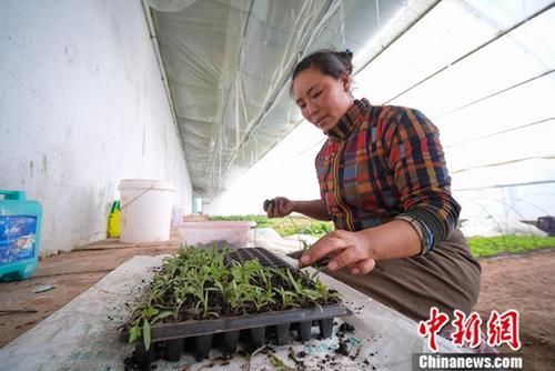 资料图片。中新社记者 何蓬磊 摄
