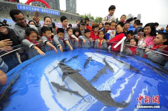 图为小学生参与中华鲟放流活动。<a target='_blank' href='http://reggaechina.com/'>中新社</a>发 刘康 摄