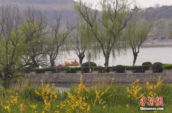 4月12日,北京牛口峪湿地公园内春意盎然。公园位于北京房山区燕山,前身是燕山石化专门储蓄处理达标后的工业外排水水库,2017年水库升级改造为湿地公园向公众开放。目前园内动植物种群逐渐丰富,已经有黑鹳、大天鹅、翠鸟等50多种野生鸟类在这里栖息安家,真正实现了从达标排放到生态保护的提升。/p中新社记者 贾天勇 摄
