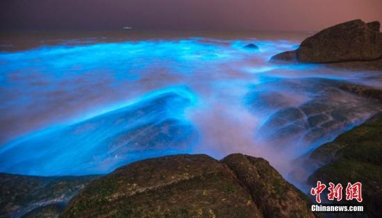 """資料圖:""""藍眼淚""""學名希氏彎喉海螢,簡稱海螢,是生活在海灣裡的一種浮遊熒光生物。圖片來源:東方IC 版權作品 請勿轉載"""