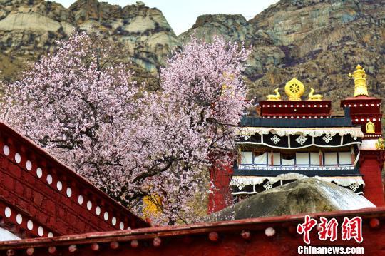 资料图:拉萨古寺。 江飞波 摄