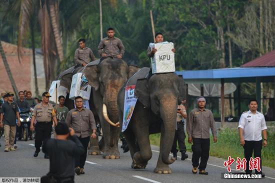 """4月17日,印度尼西亚迎来五年一次的总统选举。""""千岛之国""""印度尼西亚国土辽阔,东西绵延5500多公里,在苏门答腊省,印尼当局使用大象将票箱驮运至偏远的投票点。"""