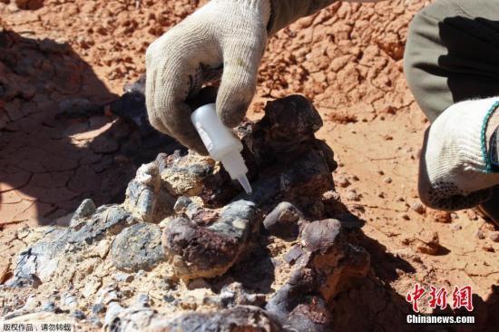 """当地时间4月17日,科学家宣布在阿根廷西部发现了一座2.2亿年前的恐龙""""墓地?#20445;?#20854;中至少有10只恐龙的化石。"""