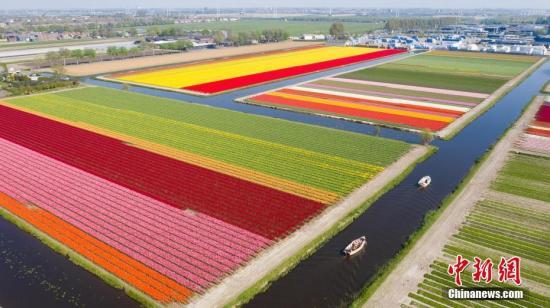 材料图:荷兰,斑斓的郁金喷鼻田。 图片滥觞:视觉止您