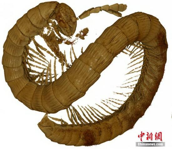 资料图:千足虫。 图片来源:视觉中国
