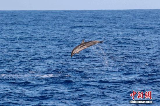 全球变暖致海洋氧气含量减少 大型鱼类陷灭绝危机