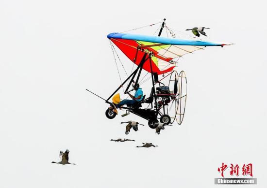 """5月18日,""""2019年国际航联天下飞翔者年夜会""""正在位于武汉经济手艺开辟区的汉北通映鳅场落幕,去自环球的远700名顶尖飞翔员、航空活动员齐散武汉睁开空只浩婕。图年夜雁取动力吊挂滑翔机一路御风翱翔。a target='_blank' href='http://www.chinanews.com/'种孤社/a记者 张畅 摄"""