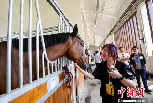 资料图:武汉军运会马术比赛场馆马房。中新社记者 张畅 摄