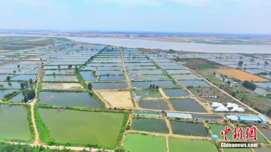 黄河郑州桃花峪段,万亩鱼塘宛如调色盘。 张为涛 摄