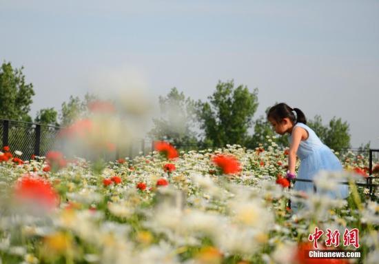 资料图:一名小女孩在北京世园会植物馆屋顶花园赏花。。/p中新社记者 张兴龙 摄