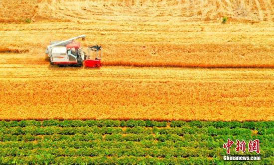 河南今年粮食总产量达1339.08亿斤 再创历史新高