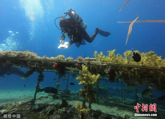 根据国际最新研究,漂白对珊瑚生理有长期影