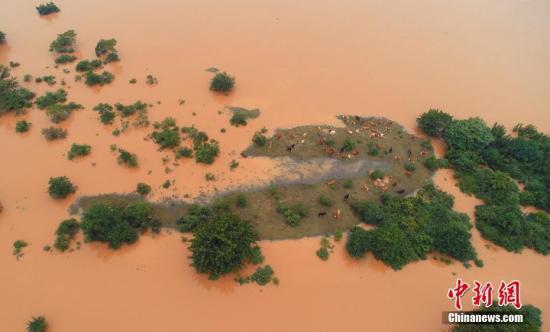 6月12日,航拍江西省吉安市泰和县赣江段,受持续强降雨影响,赣江水位上涨,已超过警戒线,赣江岸边的公园、水上设施进水,牧场被淹、牛群被洪水围困。6月7日以来,受强降雨影响,江西泰和县多条河流相继出现超警戒水位,村庄农田被淹,道路电力中断,防汛抗洪形势严峻。灾情发生后,泰和县众志成城全力防汛抗洪,全县12个工作组赴各乡镇指导防灾救灾和防汛工作,让受灾群众早日恢复生产生活。邓和平 摄