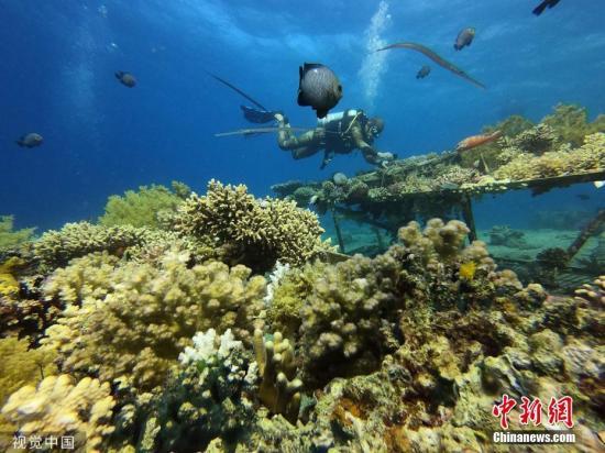 材料图:珊瑚礁。图片滥觞:视觉止您