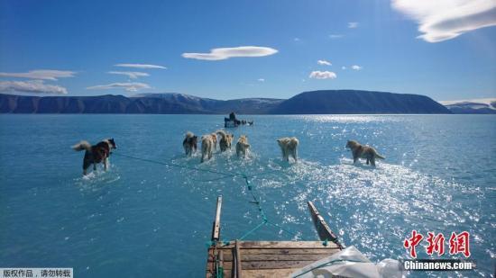 资料图:6月19日消息,据报道,格陵兰岛位处北极圈内,被大量冰雪覆盖,但当地近日出现不寻常的融冰情况,约20亿吨冰雪在一日内融化。图为6月13日在格陵兰岛西北部,雪橇狗穿过冰川融化后形成的湖水。