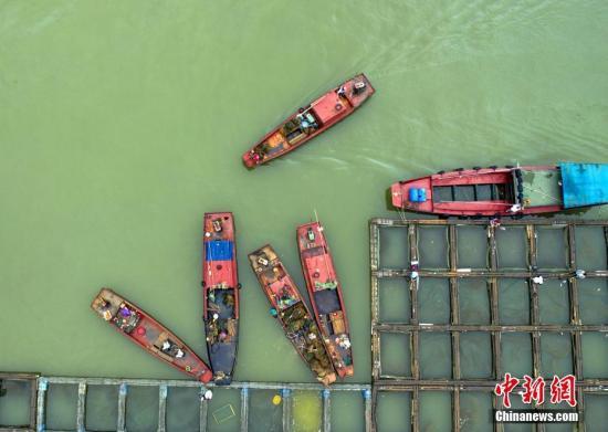 长江流域禁捕后如何监管查处非法渔获交易?官方回应图片