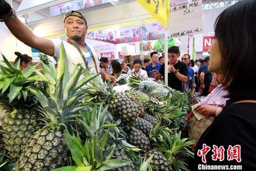 材料图:台湾菠萝。a target='_blank' href='http://www.chinanews.com/'种孤社/a记者 张讲正 摄