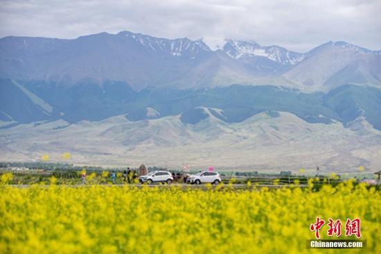 7月上旬,新疆东天山哈密巴里坤县境内的数万亩油菜花进入盛花期,金黄色的油菜花竞相开放。放眼望去,金色的油菜花与蓝天白云相映成趣,构成一幅美丽的田园画卷,吸引各地游客前来观赏拍摄留影。达吾提·热夏提 摄