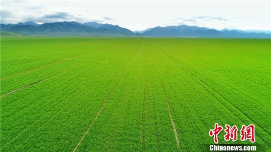 资料图:耕地。 王超 摄