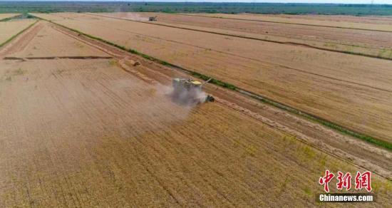 为保护粮农的长处,2019年新疆持续进步耕天天力庇护补助。齐旭云 摄