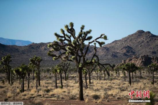 报告:欧洲特有树种超半数濒临灭绝 66种属极危