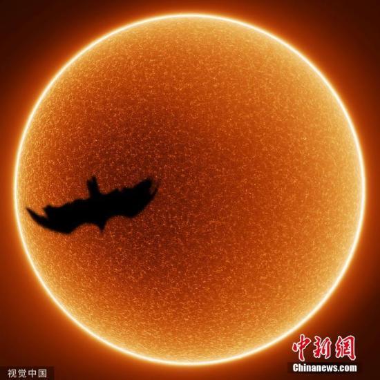 安德鲁·麦卡锡的另一个作品,拍摄的一只秃鹰向太阳飞去的瞬间。图片来源:视觉中国