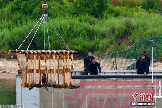 """2019年7月11日,俄罗斯相关工作人员在""""鲸鱼监狱""""里用卡车将一头虎鲸装载到一个特殊的水箱中,准备将这三头虎鲸运送到奥霍茨克海岸的放生地。"""
