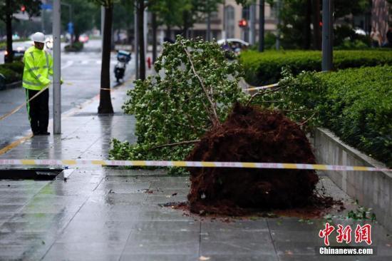 """8月10日,上海街头的一棵行道树被台风""""利奇马""""连根拔起。当日,受台风""""利奇马""""影响,上海全市普降暴雨,风力最大达9级。<a target='_blank' href='http://www.chinanews.com/'>中新社</a>记者 汤彦俊 摄"""