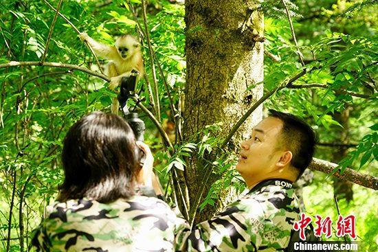 8月12日,正在湖北省采访的两岸媒体荆楚行成员到访神农架国家公园大龙潭金丝猴研究基地,参观国家一级保护动物金丝猴的栖息地,了解动物保护情况。 <a target='_blank' href='http://www.lvfngu.tw/'>?#34892;?#31038;</a>记者 王捷先 摄