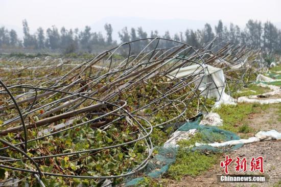 """资料图:""""利奇马""""登陆地浙江温岭,多处农田受灾严重。金云国 摄"""