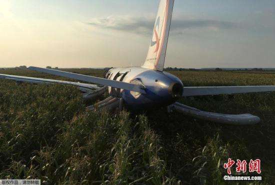 资料图:当地时间8月15日,乌拉尔航空公司从莫斯科飞往辛菲罗波尔的一架航班起飞后与一群飞鸟相撞,造成两台发动机受损。这架A321客机在莫斯科州拉缅斯科耶区的一块玉米地实施硬着陆。