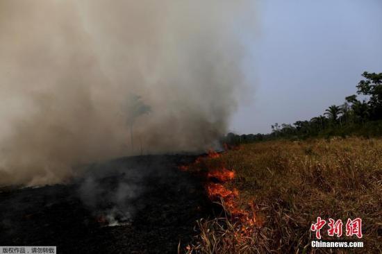 资料图:巴西亚马孙雨林大火,浓烟滚滚满目苍夷。
