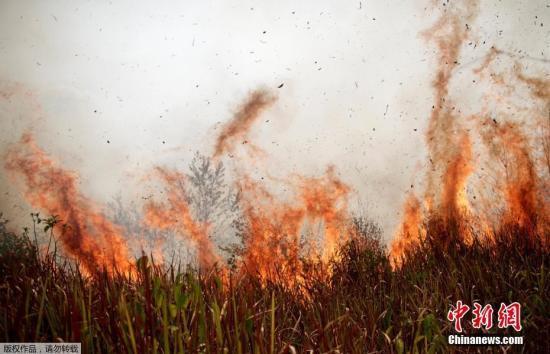 實拍巴西亞馬孫雨林大火,濃煙滾滾滿目蒼夷。