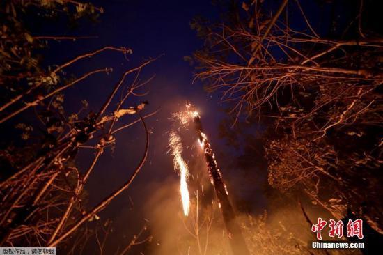 当地时间8月24日,亚马孙雨林的树木着火。