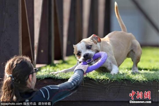 资料图:宠物狗。图片来源:Sipaphoto 版权作品 禁止转载