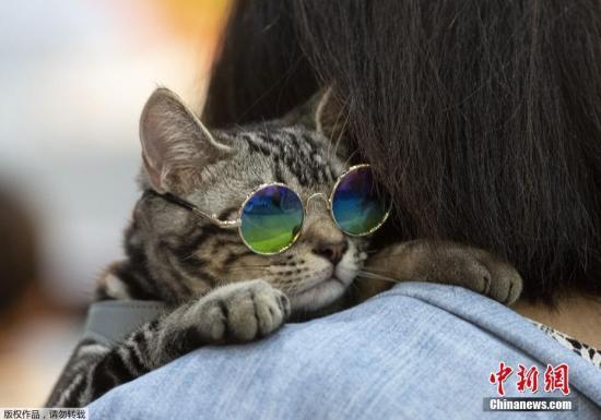 """日媒:日本决定将""""宠物看护师""""列入国家职业资格图片"""
