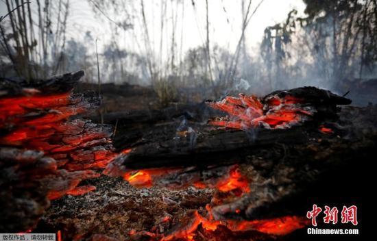 当地时间8月30日,巴西帕拉州阿普伊,消防队员正在亚马孙雨林灭火。当日,亚马孙雨林大火持续燃烧。