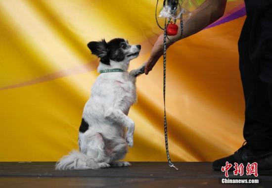 资料图:宠物狗。 中新社记者 刘关关 摄