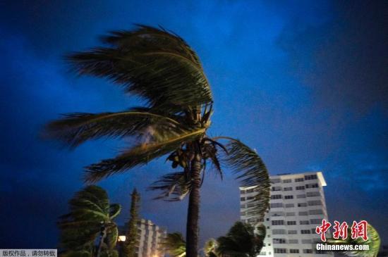 """美国国家飓风研究中心1日称,大西洋飓风""""多里安""""已升级为5级飓风。图为飓风""""多里安""""带来的强风抵达巴哈马群岛大巴哈马自由港的第一时刻,强风吹动棕榈树叶。"""