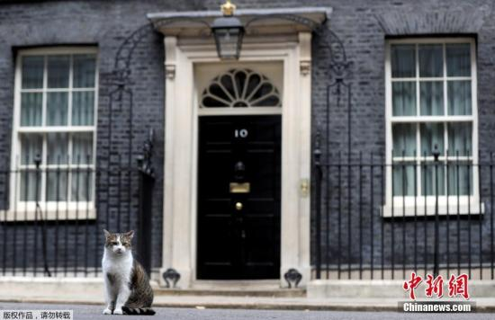 """资料图:英国""""首席捕鼠大臣""""在唐宁街10号首相府前。"""
