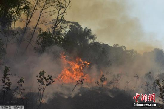 亚马逊森林火灾