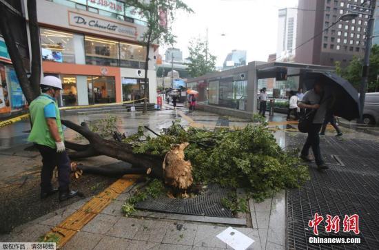 """材料图:""""玲玲""""侵袭韩国。政府另接获数百宗轻细不测陈述,年夜多是塌树及灯柱战交通灯益誉。"""