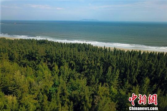 中国2019年造林1.06亿亩 2020年计划1.01亿亩