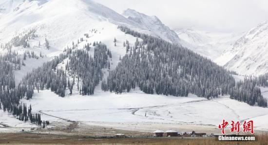 资料图:降雪过后,草原上依然牛羊成群。陶拴科 摄