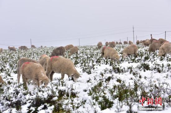 新疆將有雨雪大風降溫天氣 華北中南部大氣擴散條件轉差