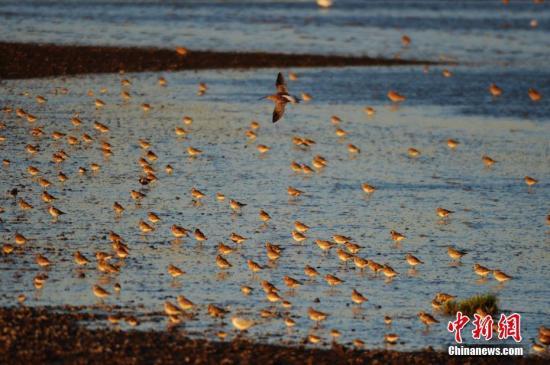 资料图:候鸟。 中新社发 王海滨 摄 图片来源:CNSPHOTO
