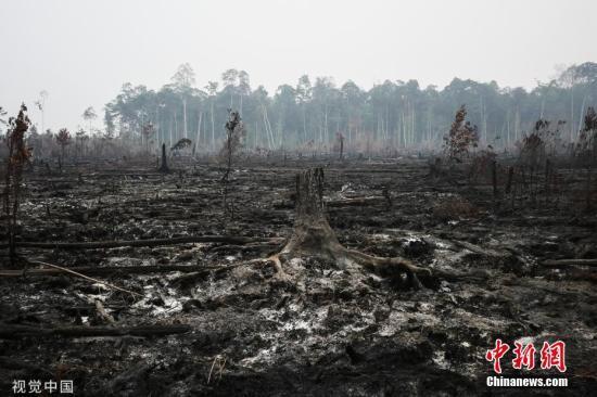 本地工夫2019年9月21日,印度僧西亚减里曼丹中部Palangkaraya,丛林年夜水后一片兴墟,烟霾覆盖。 图片滥觞:视觉中国