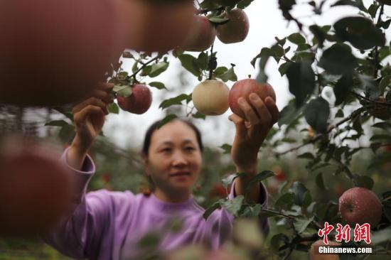 四部门推动农业保险高质量发展