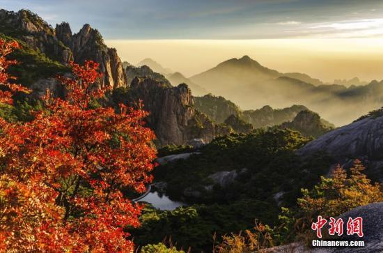 资料图:安徽黄山秋日层林浸染云海翻涌。方立华 摄